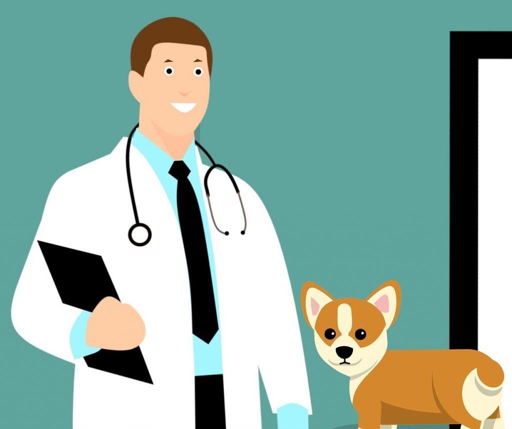 kosice veterinar